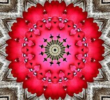 'Very Verbena Mandala' by Scott Bricker