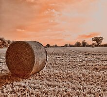 Norfolk Summer Fields UK by Mark Snelling