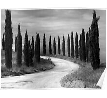 Cypress Trees, Sienna, Italy Poster