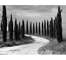 Cypress Trees, Sienna, Italy Photographic Print