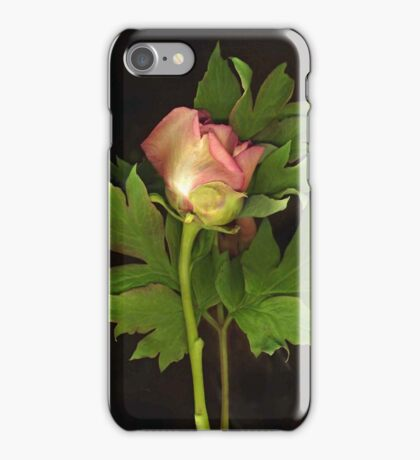 Tree Peony iPhone Case/Skin
