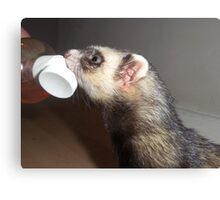 Polecat with treat Canvas Print