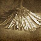 Vintage Gerbera ~ No 2 by Rosalie Dale