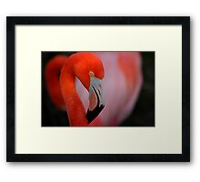 "Another ""Are You Looking At Me"" Framed Print"
