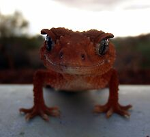 Smiling Gecko, perhaps. by Mick Rose