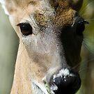 Oh Deer! by Donna Adamski