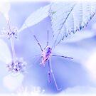 Spider Dreams by Jenny Ryan