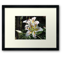 Glorious Lilies! Framed Print