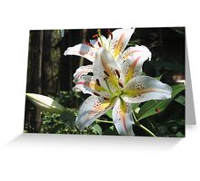 Glorious Lilies! Greeting Card