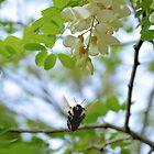 Bumblebee In Flight by ©Dawne M. Dunton
