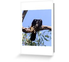 Crow with a cane toad Greeting Card
