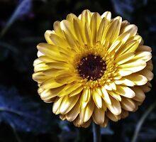 Golden Petals by MsKimberly