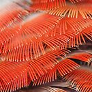 Red Feathers by Maryanne Lawrence