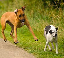 Playful Dogs by Richie Wessen