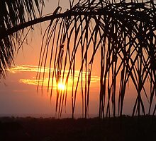 Sunrise from Patio...2 by Frandiana