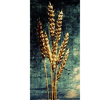 The Final Harvest. Photographic Print