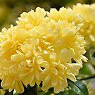 Yellow Roses by ©Dawne M. Dunton