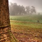 Fog behind the tree at La Trobe Uni, Beechworth by Elana Bailey