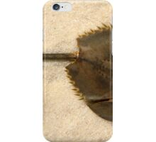Funky Horseshoe Crab