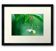 August 'Green world' Framed Print