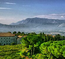 Vineyard in Monte Cassino by photorolandi