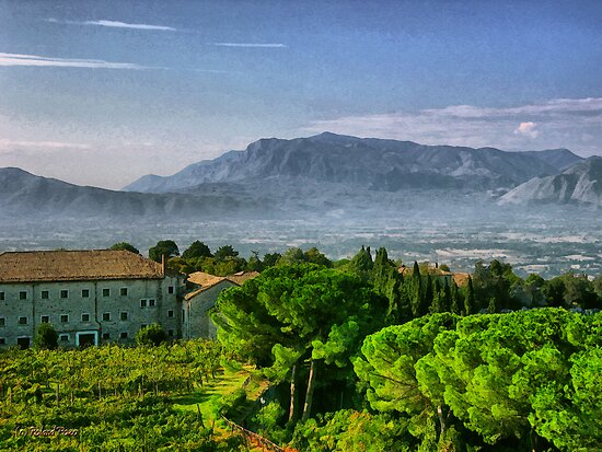 Vineyard in Monte Cassino by photorolandi