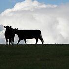 Dos vacas negras by Enivea