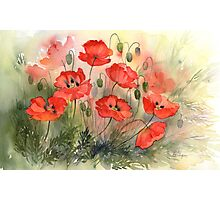 Field Poppies Photographic Print