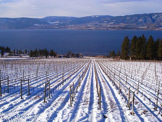 Cedar Creek Vineyards by Gregory Ewanowich