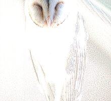 Barn Owl by Holly Kempe