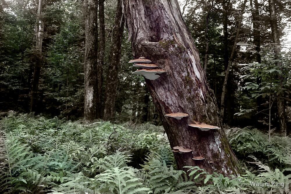 Shelf Fungus at Langdon Park by Wayne King