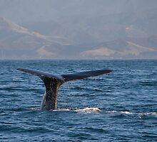 Sperm Whale by Angela1