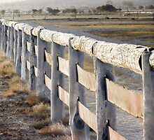 Don't Fence Me In by Holly Kempe