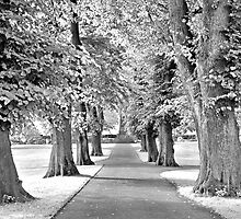 Park IR by James Coard