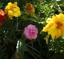 Marigolds by Sheila Nolan