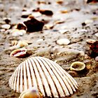 Krabi, Thailand | Seashells on the seashore by webgrrl