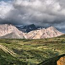 The Many Colors of Denali by Vickie Emms