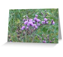 Lavender Buttons Greeting Card