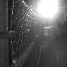 Sunlight Chainlink Fence by Nick McGuire