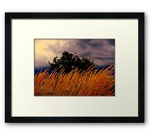 Grasses  Blowing In the wind  Framed Print