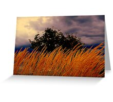 Grasses  Blowing In the wind  Greeting Card