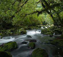 Riwaka River. by Michael Treloar