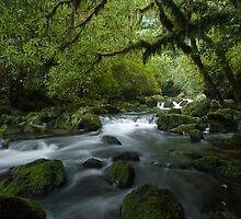 Riwaka River. by Michael Treloar