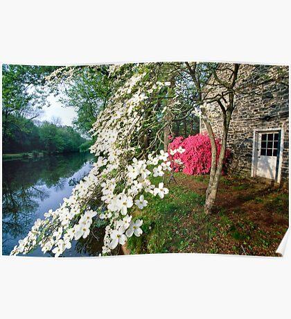 Spring Bloom along the Delaware-Raritan Canal, Poster