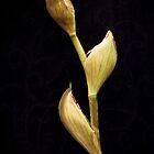 Iris by Kristen Coleman