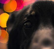 Trixie the Dog - Portrait - 2 by RHeavenridge