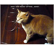 """Max The """"Boss"""" Photographic Print"""