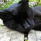 sleepy little old lady by stellaozza