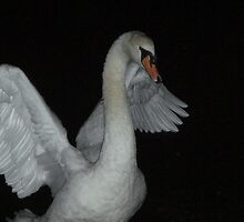 swan at night by Rosa  D'Alessio