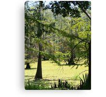 Swamp View Canvas Print